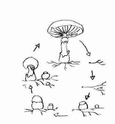Comme exterminer des helminthes chez les poules