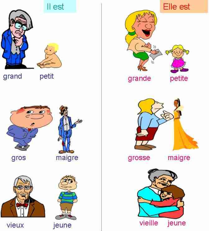 Fle - adjectifs contraires-se décrire - cours