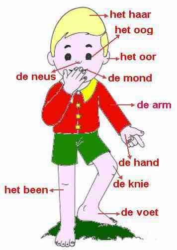 Corps humain (le)néerlandais