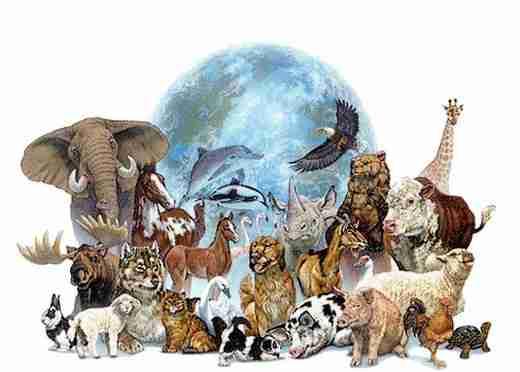 Résultats de recherche d'images pour «animaux»