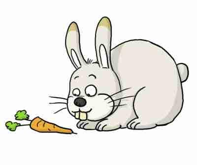 Animaux anglais - Dessins lapins ...