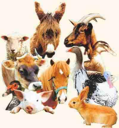 Animaux de la ferme for Alimentation chien maison