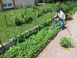 vocabulaire jardiner anglais. Black Bedroom Furniture Sets. Home Design Ideas